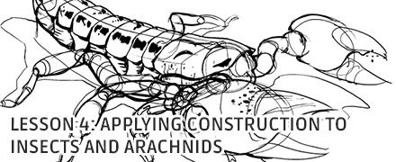 Applying Construction to Insects and Arachnids